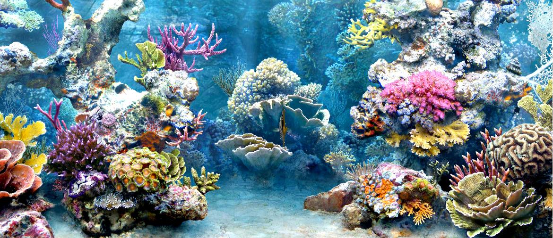 Coral-care_01