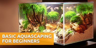 aquascaping tanks