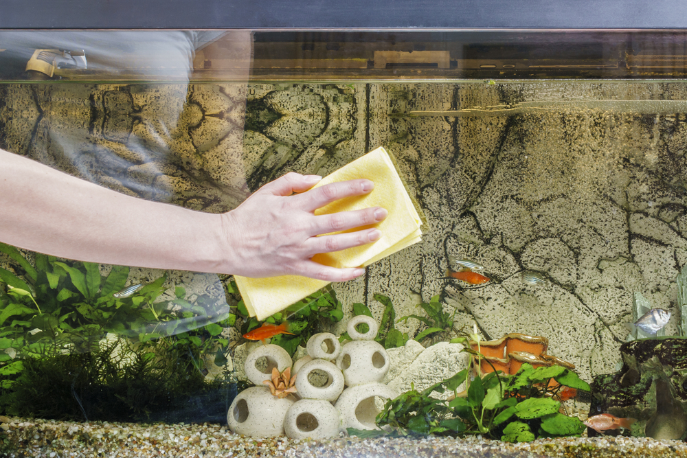 how to remove mold from a fish tank