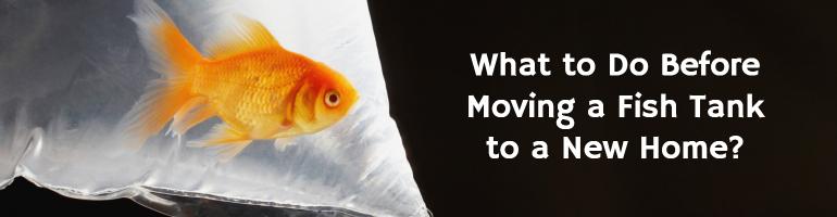 professional aquarium movers
