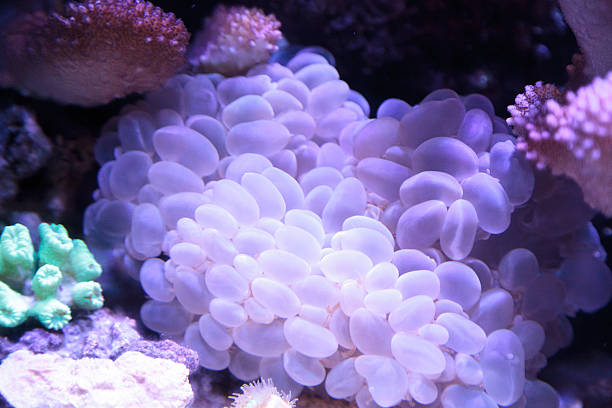 Exotic Fish and Corals